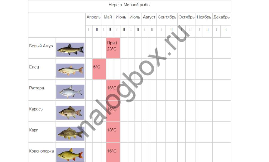 Штраф за ловлю рыбы сетями в 2019 году